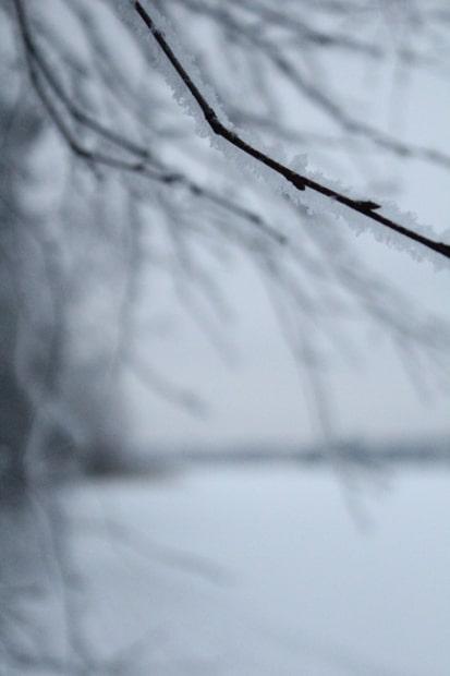 Lunta kaikkien oksien päällä.