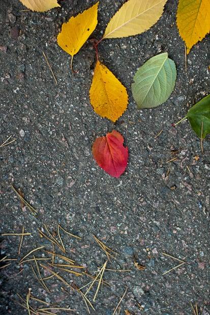 Lehdet kertovat syksystä.