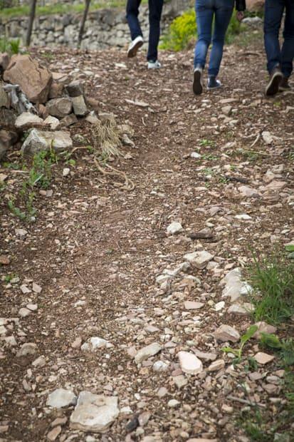 Kalkkikiviset polutn pätkät kulkevat viljelysten reunoilla.