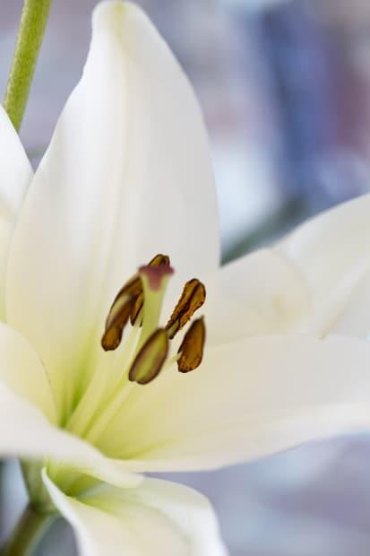 kukkia_-5