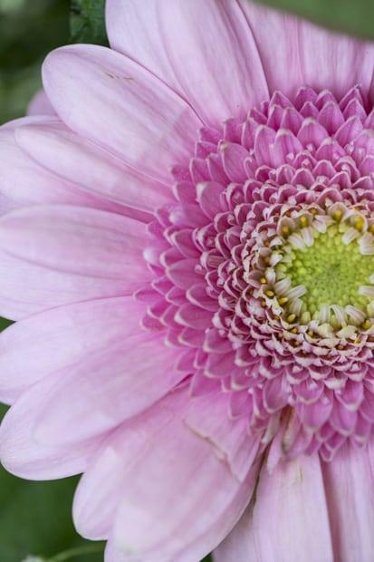 kukkia_-6