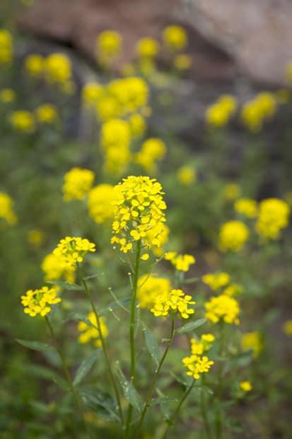 Kesän keltaista.