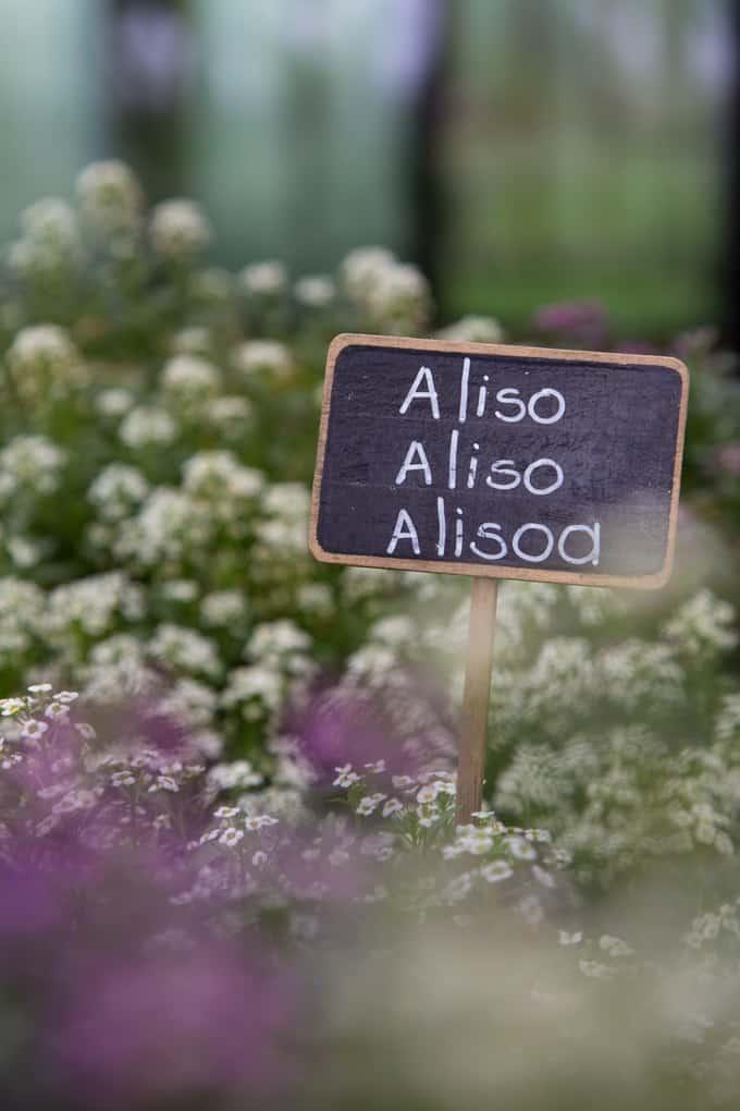 Itsekasvatetut yrtit ja kukat maustavat annoksia Azurmendissä.