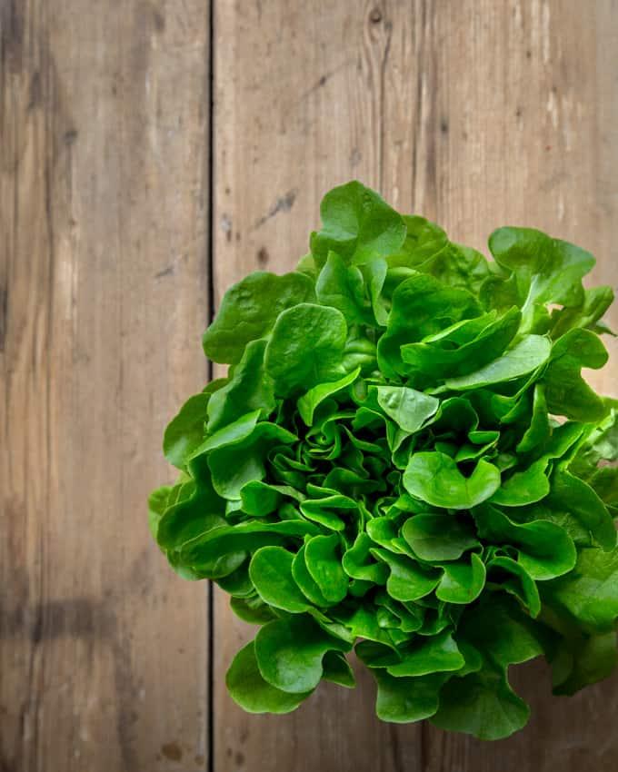 salaattiprojekti-mari-moilanen