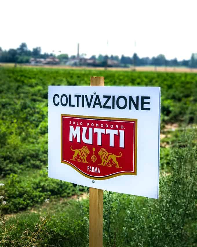 mutti-soosi, mutti-kastike, mutti-pastakastike, mutti, vierilu muttin tomaattviljelmille, feta-yrttipastakastike, feta-yrttitomaattikastike pastalle