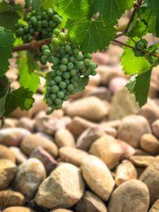 chateauneuf-du-pape, ogier, viinimatka etelä-ranskaan