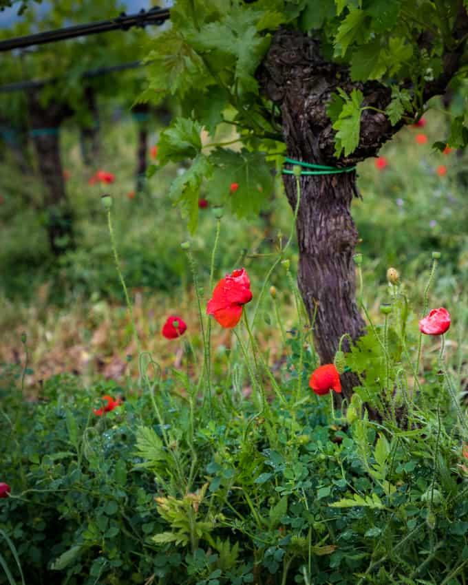sicilia en primeur, viinimatka siciliana, sisilian viinit, sisilia