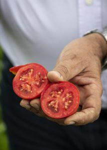 polpa hieno tomaattimurska, mutti