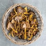 suppilovahverorisotto, sienirisotto, risotto, näin valmistat risoton, viini sienirisotolle, viini suppilovahveroille