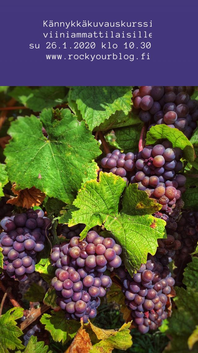 kännykkäkuvauskurssi, ruokakuvauskurssi, kännykkäkuvauskurssi viiniammattilaisille