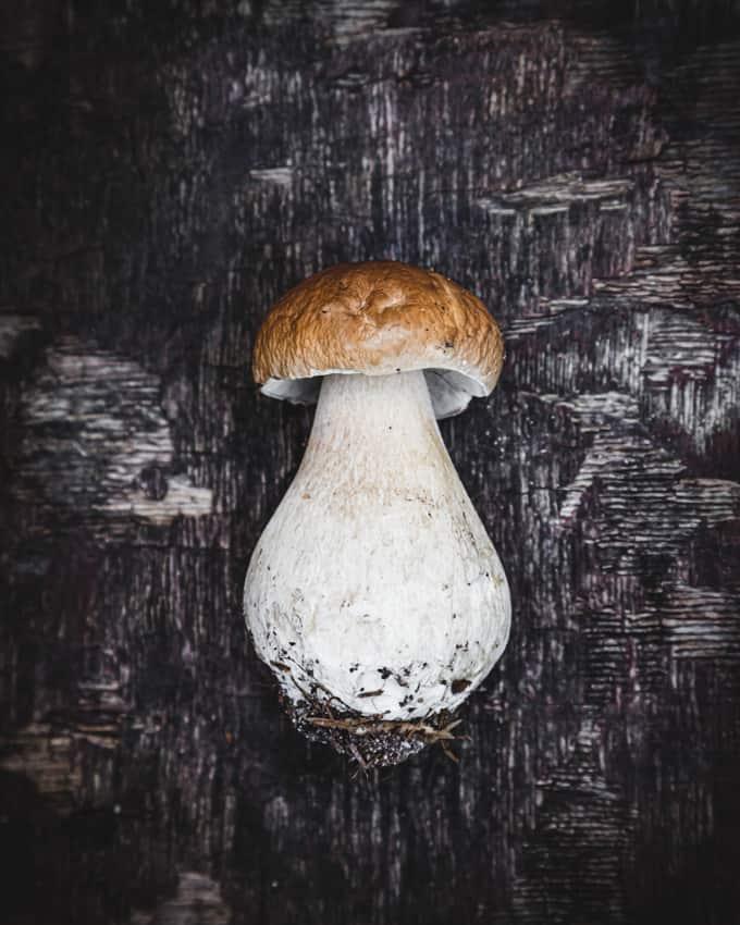 herkkutatti, tattien näköislajit, voiko tatit sekoittaa myrkkysieniin, suppilovahveroiden näköislaji, voiko suppilovahverot sekoittaa myrkkysieniin, tunnetko sienet